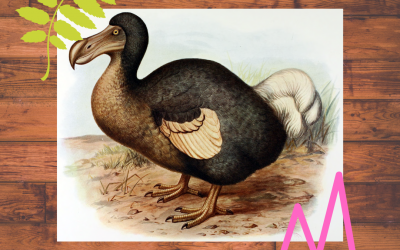 Spotlight: Dodo