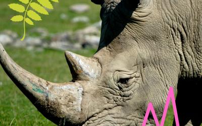 Spotlight: Rhino
