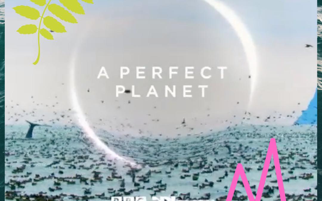 David Attenborough: A Perfect Planet.